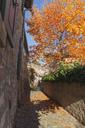 Germany, Rhineland-Palatinate, Freinsheim, city wall and empty way in autumn - GWF05641