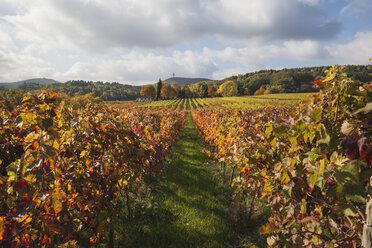 Germany, Rhineland-Palatinate, Weisenheim am Berg, vineyards in autumn colours, German Wine Route - GWF05644