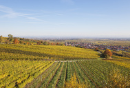 Germany, Rhineland-Palatinate, Kallstadt, vineyards in autumn colours, German Wine Route - GWF05653