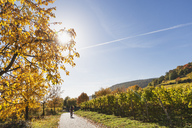 Germany, Rhineland Palatinate, Pfalz, hiker on wine-route-hiking-trail, vineyards and cherry trees in autumn colours - GWF05671