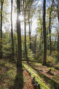 Germany,Rhineland-Palatinate, Pfalz, Palatinate Forest Nature Park in autumn - GWF05680