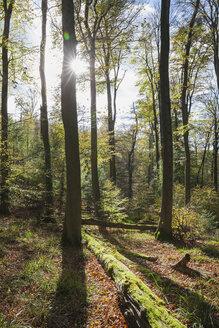 Germany,Rhineland-Palatinate, Pfalz, Palatinate Forest Nature Park in autumn - GWF05680