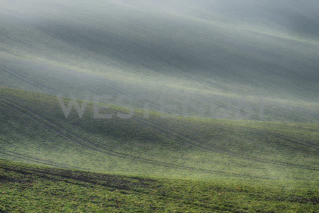 Rolling field landscape in early spring - RUEF01935
