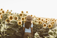 Back view of young woman standing in a field of sunflowers - OCAF00354