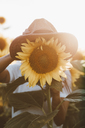 Sunflower with hat - OCAF00360