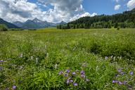 Austria, Tyrol, Tannheim Valley, - LBF02065