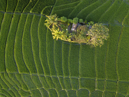 Indonesia, Bali, Aerial view of rice fields - KNTF01519