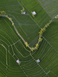 Indonesia, Bali, Aerial view of rice fields - KNTF01522