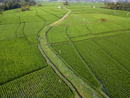 Indonesia, Bali, Aerial view of rice fields - KNTF01525