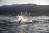 Young man diving in a lake - MRAF00292