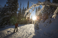 Cross country skiing, Banff National Park - AURF05162