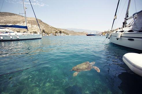 Sea Turtle looking for food in harbor. Megisti Island (Castellorizo) Greece - AURF05516