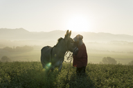 Italy, Tuscany, Borgo San Lorenzo, senior man standing with donkey in field at sunrise above rural landscape - FBAF00099