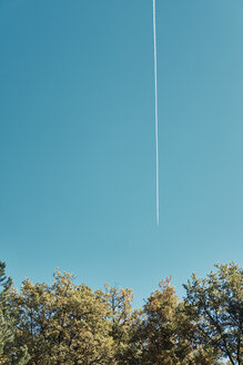 Bulgaria, Sofia, Branches of a autumnal tree against a sky with a trace from an airplane - BZF00462