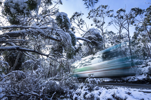 A shuttle bus travelling through the snowy trees in Tasmania's Cradle Mountain. - AURF05889
