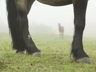 Feet of mare with foal in distance - AURF06077