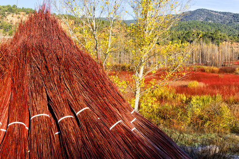 Wicker Cultivation In Canamares In Autumn - AURF06086