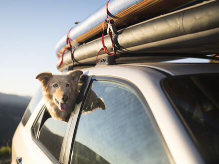 Dog looking out of side window of car, McCall, Idaho, USA - AURF06259