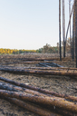 Germany, Brandenburg, Beelitz, Pine Forest, slash and burn - ASCF00883
