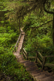 Boardwalk amidst plants in forest at Pacific Rim National Park - CAVF48880