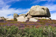 Granite stone and wildflowers in summer in Ploumanach, Brittany, France - AURF07022