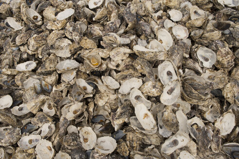 Fresh oysters, close-up, full frame - SKCF00530