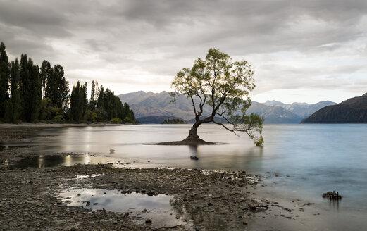 New Zealand, South Island, Otago, Wanaka, The Wanaka Tree - MKFF00427