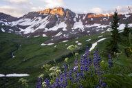 Purple wildflowers against mountain range, Aspen, Colorado, USA - AURF07513