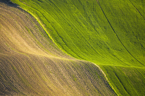 Scenery with fields on rolling hills, Steptoe Butte State Park, Palouse, Washington State, USA - AURF07558