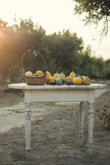 Autumn pumpkins on a wooden table in the garden - MOMF00512