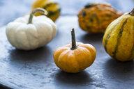 Ornamental pumpkins - JUNF01313