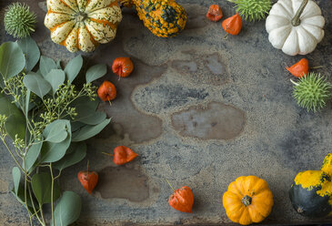 Autumnal decoration, ornamental pumpkins - JUNF01325