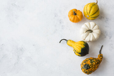 Ornamental pumpkins on white wood - JUNF01334