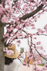 Rear view of young woman taking selfie with smart phone by cherry tree at park - CAVF49008