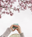 Cropped hands of young woman photographing cherry blossoms with smart phone against clear sky at park - CAVF49011