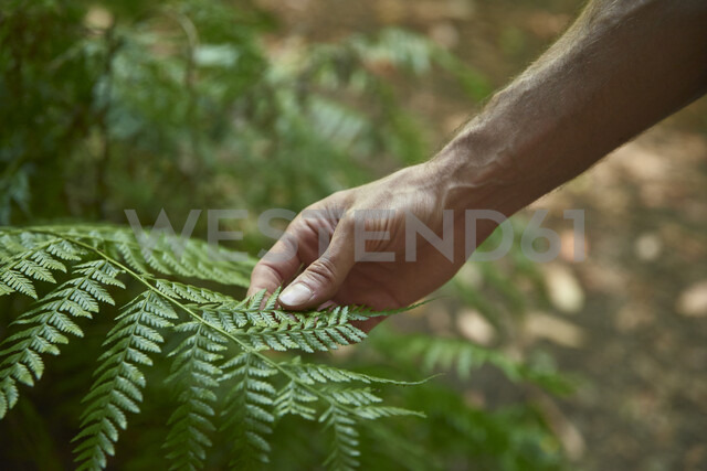 Spain, Canary Islands, La Palma, close-up of a hand touching green forest fern leaf - PACF00159