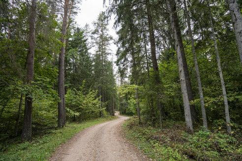 Forest in Latvia - KKAF02376