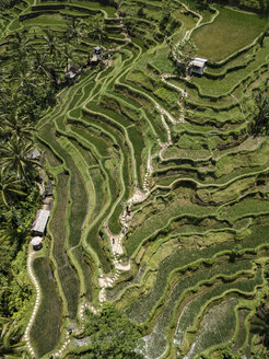 Indonesia, Bali, Ubud, Tegalalang, Aerial view of rice fields, terraced fields - KNTF01906