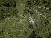 Indonesia, Bali, Ubud, Tegalalang, Aerial view of rice fields, terraced fields - KNTF01909