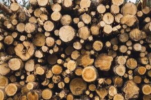 Stack of wood - KKAF02381