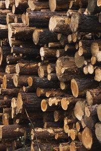 Stack of wood - KKAF02387