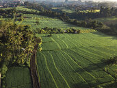 Indonesia, Bali, Ubud, Aerial view of rice fields - KNTF01980