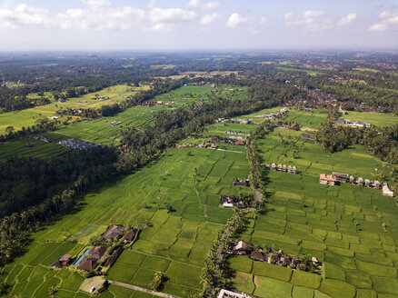 Indonesia, Bali, Ubud, Aerial view of rice fields - KNTF02013