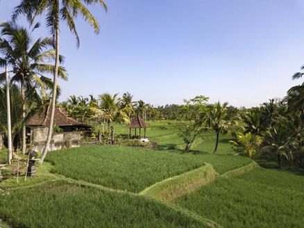 Indonesia, Bali, Ubud, Aerial view of rice fields - KNTF02016