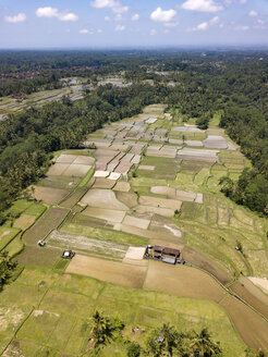 Indonesia, Bali, Ubud, Aerial view of rice fields - KNTF02019