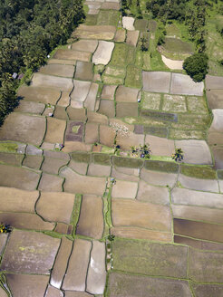 Indonesia, Bali, Ubud, Aerial view of rice fields - KNTF02022