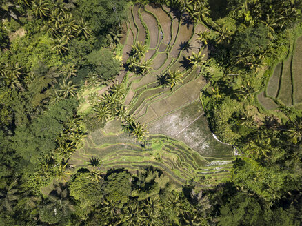 Indonesia, Bali, Ubud, Aerial view of rice fields - KNTF02025
