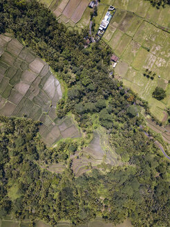 Indonesia, Bali, Ubud, Aerial view of rice fields - KNTF02028