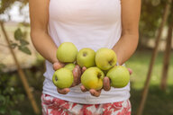 Woman holding harvested apples - JUNF01452