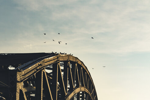 Germany, Cologne, part of Hohenzollern Bridge with flying birds - DWIF00956
